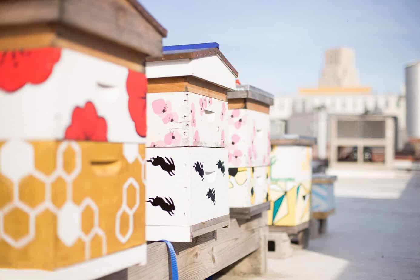Urban rooftop hives in downtown Durham, NC. (photo: Lauren Nichols)